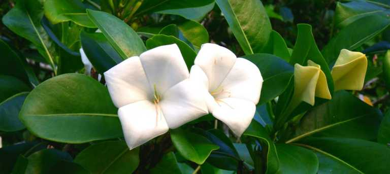 ChamorroCulture_Nature_Flowers2_ea994cf0-206f-46b1-becb-922363233772
